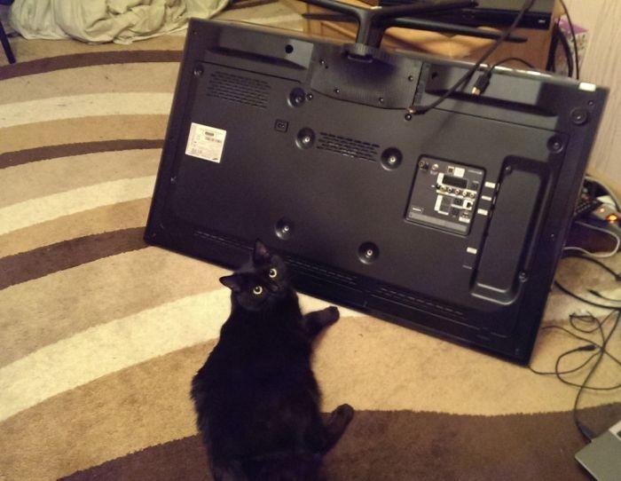 Неприятный сюрприз от кота (4 фото)