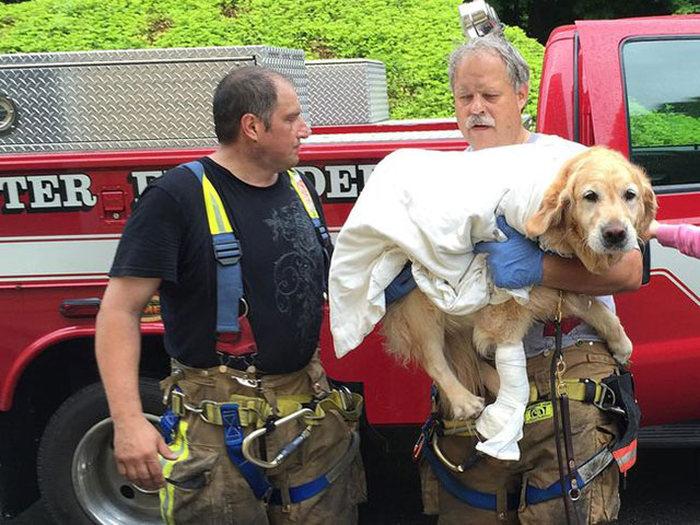 Собака-поводырь совершила героический поступок (5 фото)