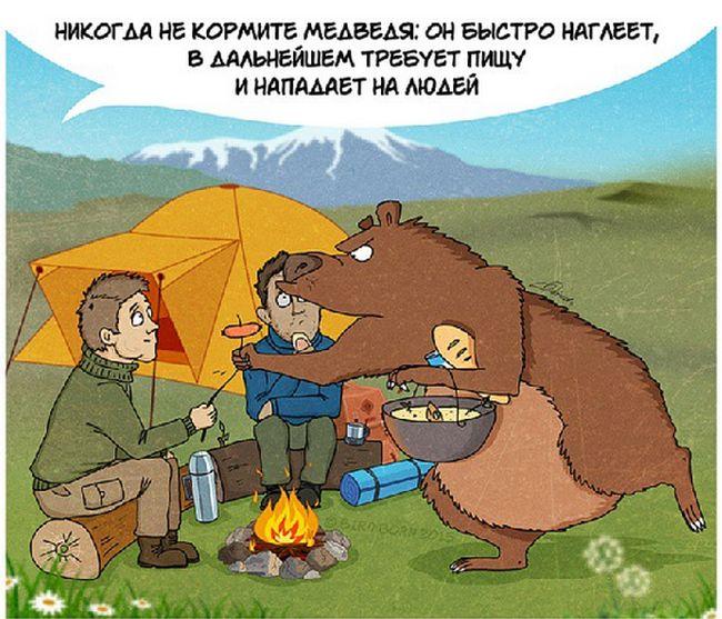 Правила поведения при встрече с медведем (10 картинок)