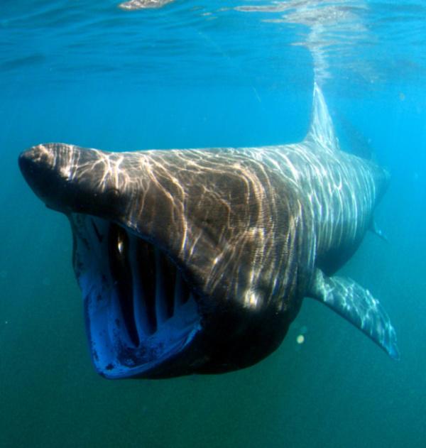 Ужасающие животные, которые совершенно безобидны для человека (7 фото)