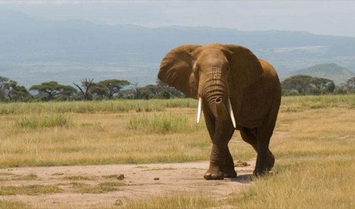 Занимательные факты об Африке (18 фото)