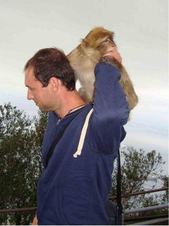 Что бывает, когда миленькая обезьянка не настроена на совместный фотосет (3 фото)