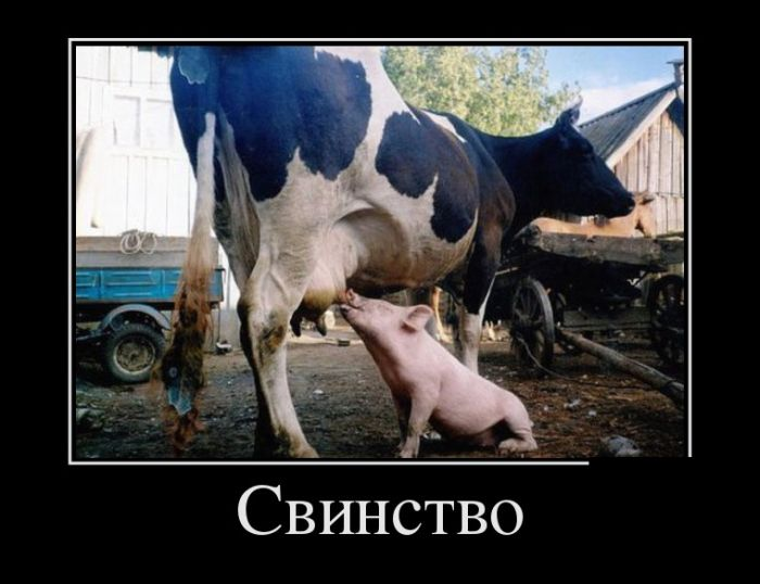 http://trinixy.ru/pics5/20150626/demotivatory_21.jpg