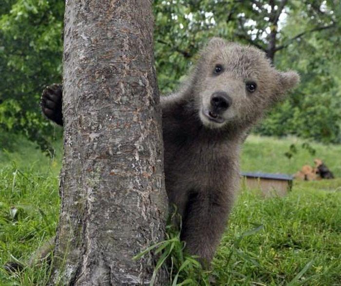 Смертельно опасные животные тоже могут быть милыми и забавными (25 фото)