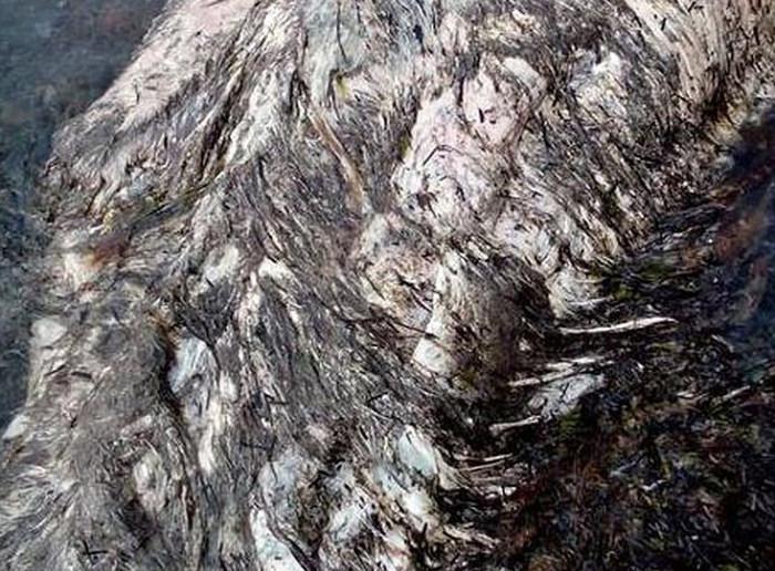 В Шахтерске обнаружили останки неизвестного животного (5 фото)