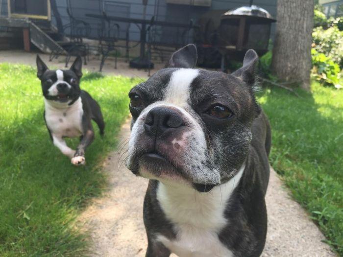 Недовольный пес по кличке Вальтер (4 фото)