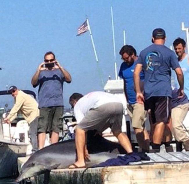 Дельфин испортил отдых американской семьи (6 фото + видео)