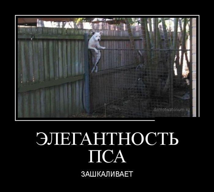 http://cdn.trinixy.ru/pics5/20150703/demotivatory_12.jpg