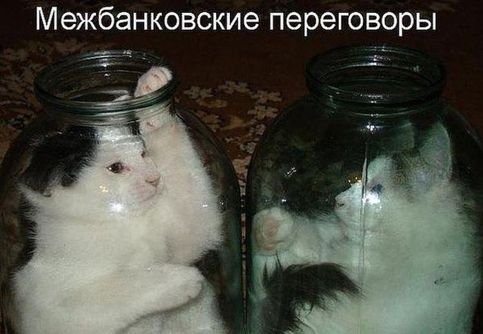 http://cdn.trinixy.ru/pics5/20150703/podborka_02.jpg