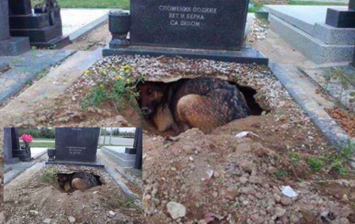 Безграничная собачья преданность (фото)
