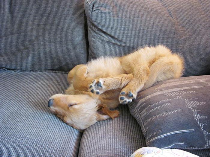 Милые спящие щенки (37 фото)