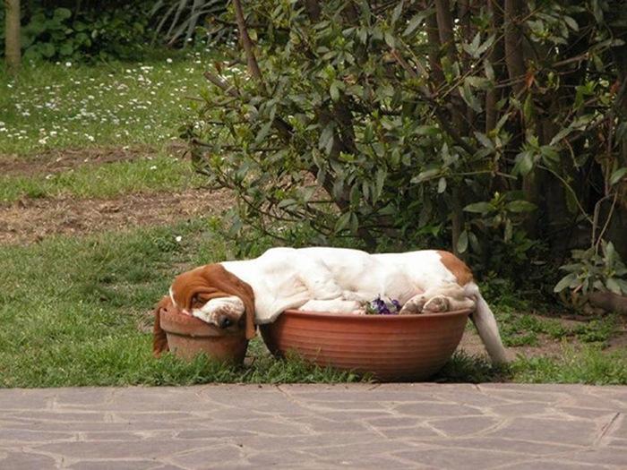 Картинки по запросу спящие щенки