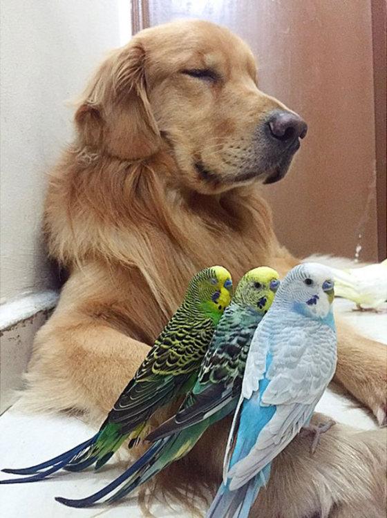 Лучшие друзья (23 фото)