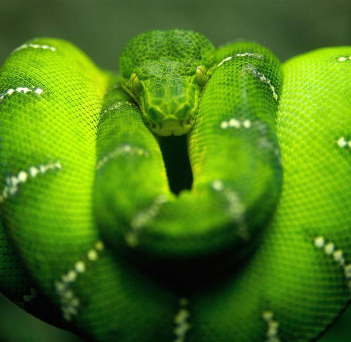 Животные, с которыми рискнул бы встретиться далеко не каждый человек (48 фото)