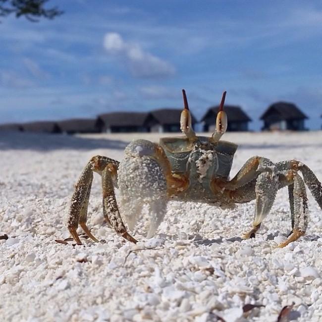 Самые популярные среди туристов острова мира (30 фото)