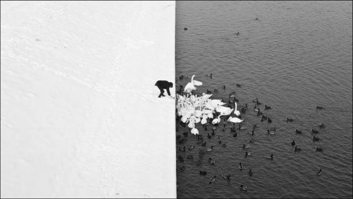 Удивительные фотографии без капли фотошопа (17 фото)