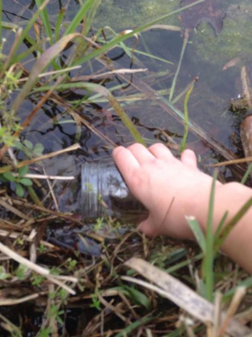Создаем замкнутую водную экосистему в банке (11 фото)