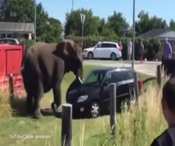 Разъяренный слон напал на автомобиль