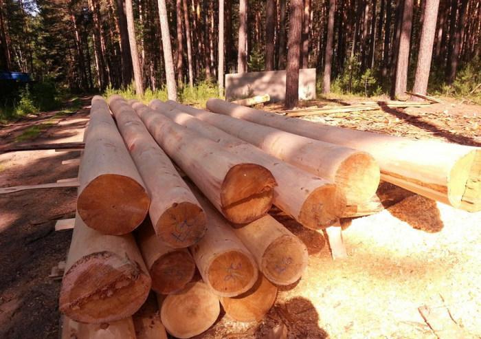 Фотоотчет о строительстве рубленной кедровой бани (50 фото)
