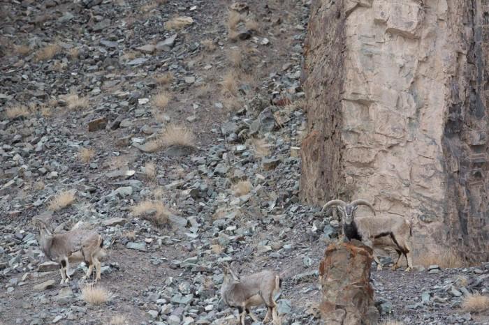 Найди затаившегося хищника на фото (5 фото)