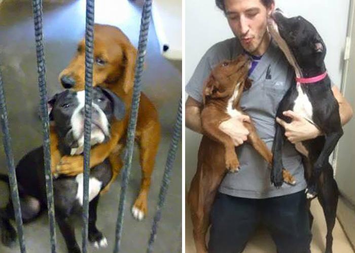 Благодаря фотографии бездомные животные, обреченные на смерть, нашли нового хозяина (2 фото)