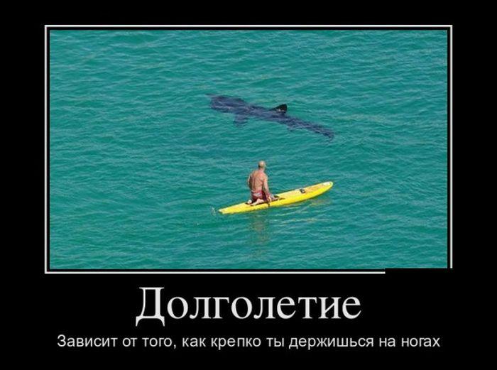 http://trinixy.ru/pics5/20150724/demotivatory_04.jpg