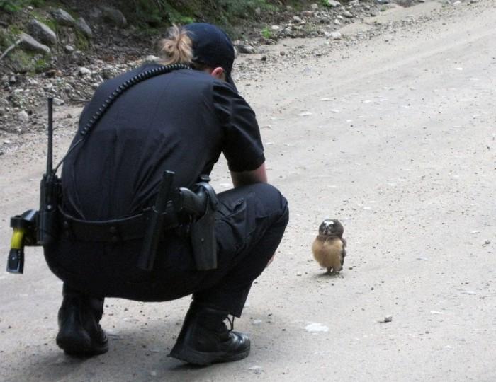Совенок преградил путь полицейским (2 фото + видео)