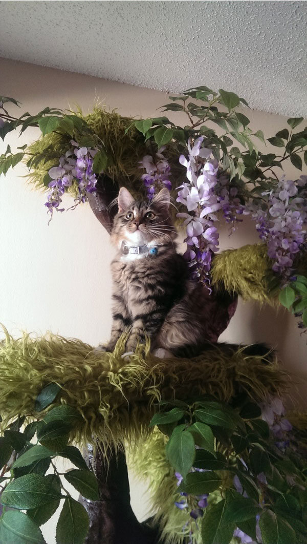 Домик для кота своими руками (23 фото)