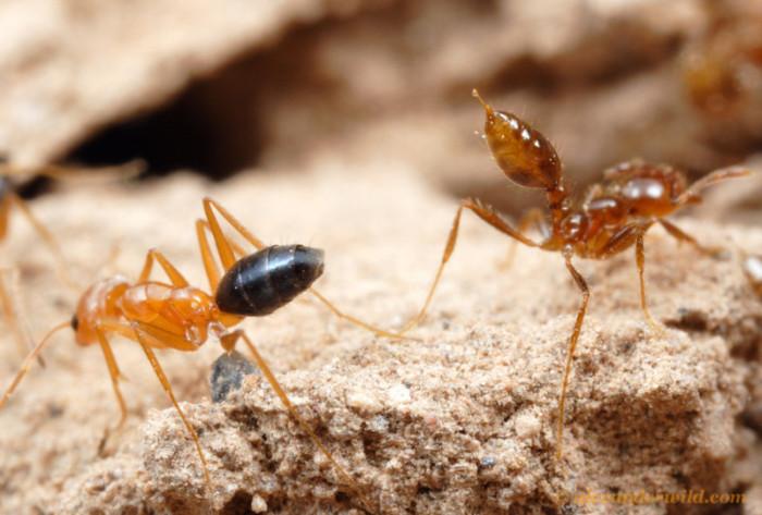 Жестокие муравьиные войны (53 фото)