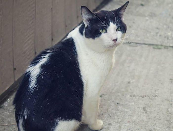 Спасение бездомного кота (8 фото)