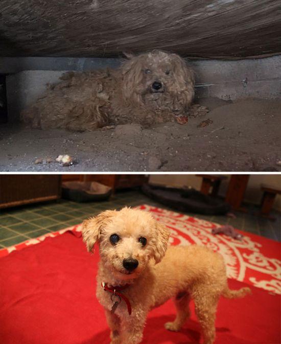 Спасенные собаки: до и после (16 фото)