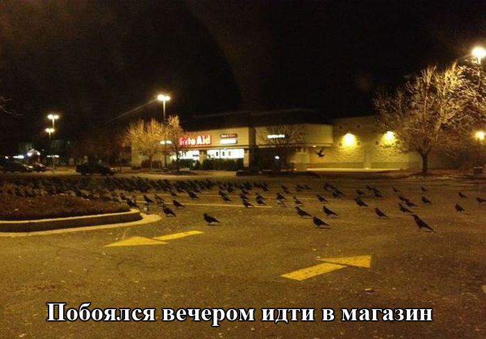 http://trinixy.ru/pics5/20150731/podborka_01.jpg