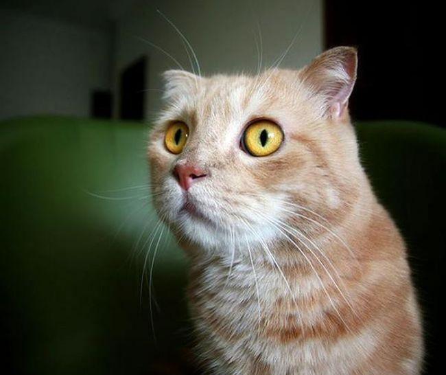 В Великобритании обнаружен отпечаток лапы кошки, жившей 2000 лет назад (2 фото)