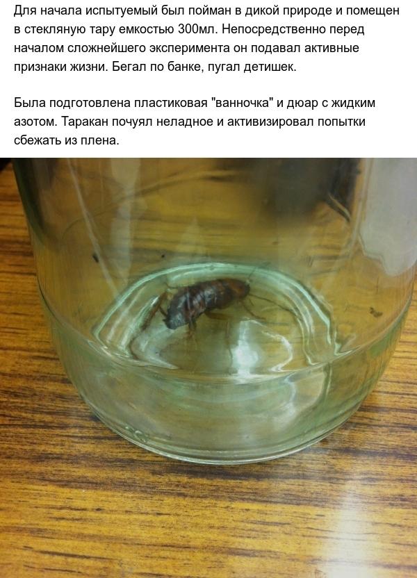Тараканы и экстремально низкие температуры (8 фото)