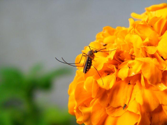 Из-за чего комары кусают некоторых людей чаще других (6 фото)