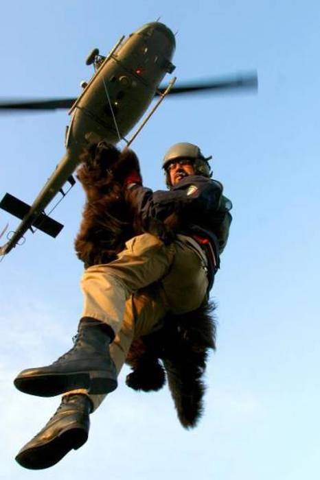 Пес-спасатель – незаменимый сотрудник береговой охраны (12 фото)