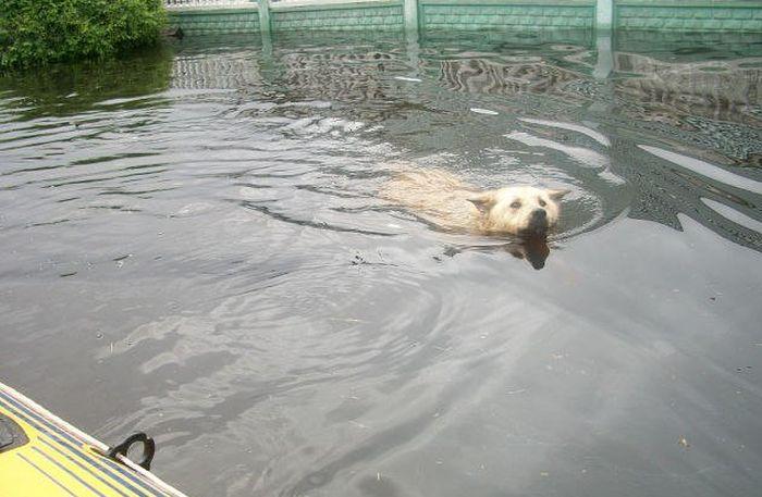 На набережной Благовещенска установили памятник псу по кличке Дружок (7 фото)