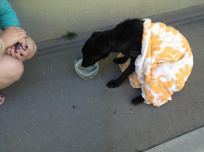 Спасение несчастной собаки в Самаре (4 фото + видео)