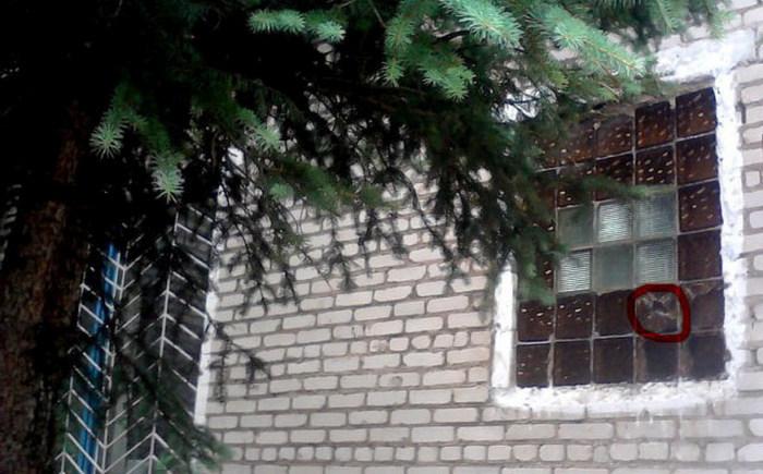 Выгода от соседства с человеком (9 фото)