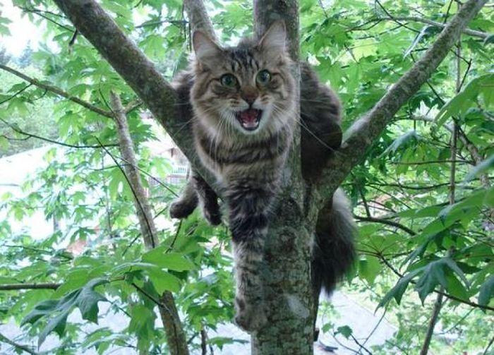 Как легко и быстро снять кота с дерева (2 фото)