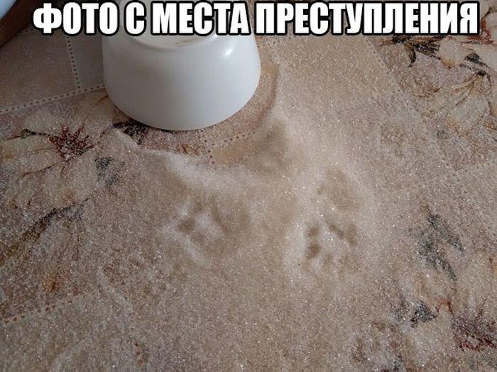 Прикольные картинки (91 фото)