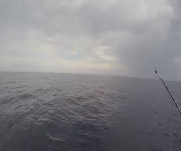 Прыгающие акулы