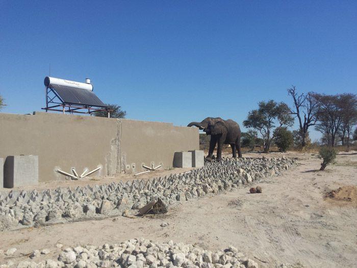 В Ботсване слоны превратили общественный туалет в место для водопоя (4 фото + видео)