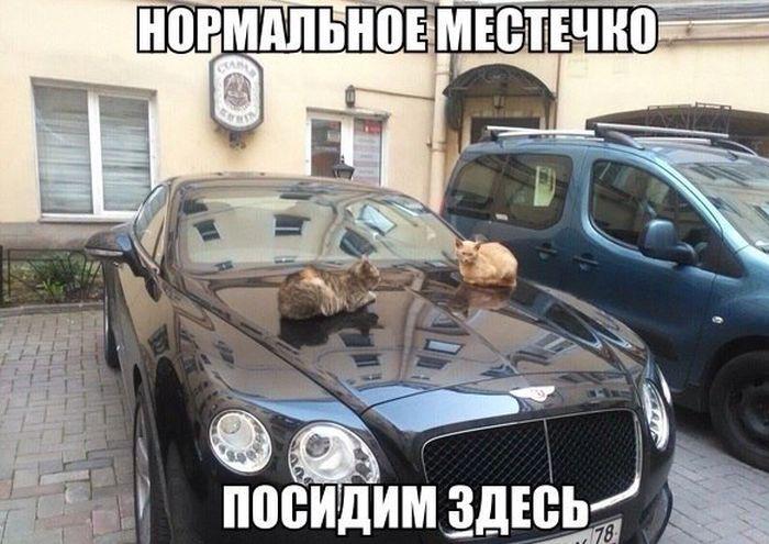 podborka_01.jpg