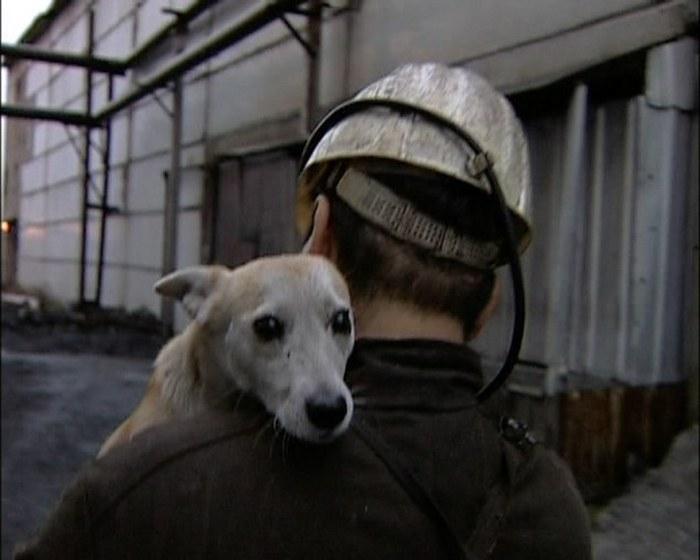 В Кемеровской области установили памятник собаке-горняку (4 фото)