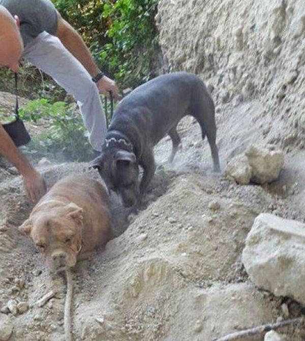 Во Франции требуют строгого наказания для парня, заживо закопавшего собаку (4 фото)
