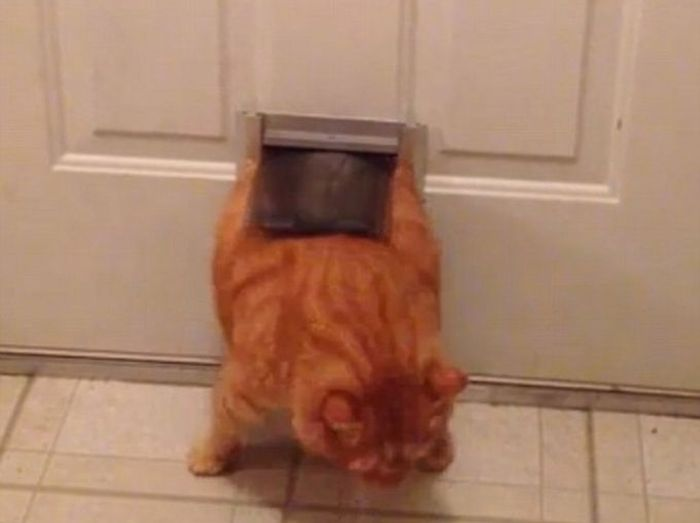 Застрявшие коты (21 фото)