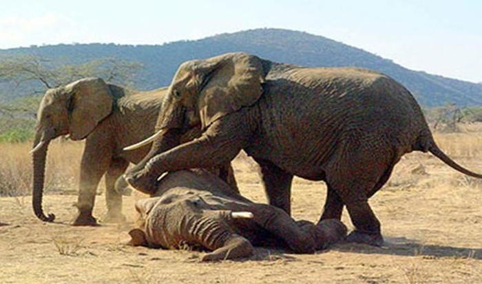 Удивительные факты в поведении животных (25 фото)