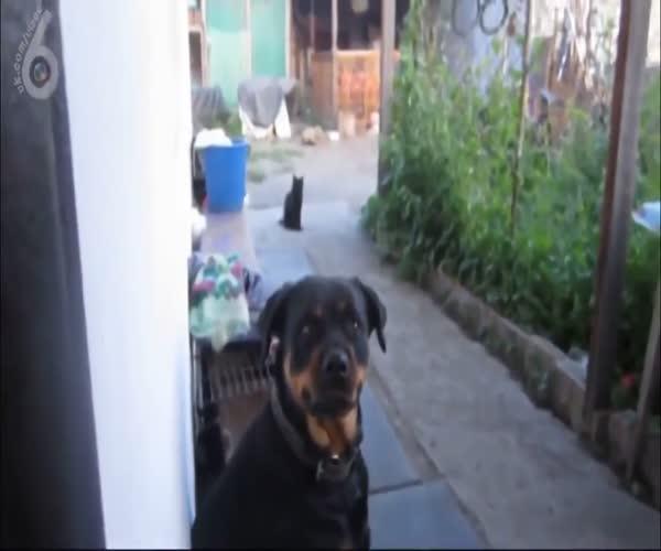 Неудачная попытка напугать собаку