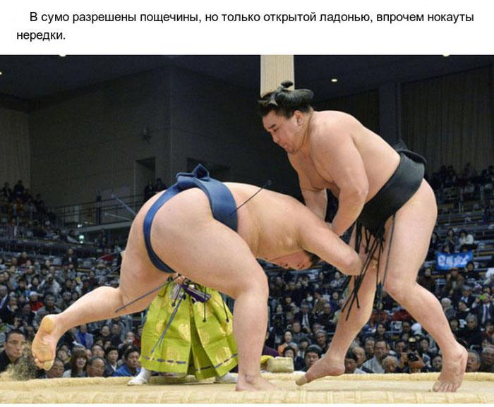 Интересные факты о сумо (10 фото)